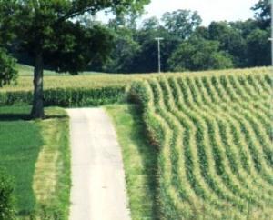 Bernadette Path to Clean Living